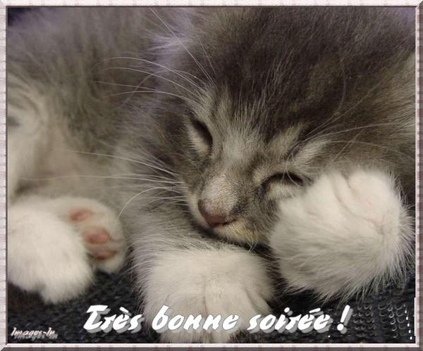 """Résultat de recherche d'images pour """"bonne soireé chat"""""""