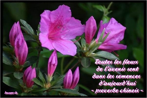 Fleurs et proverbe