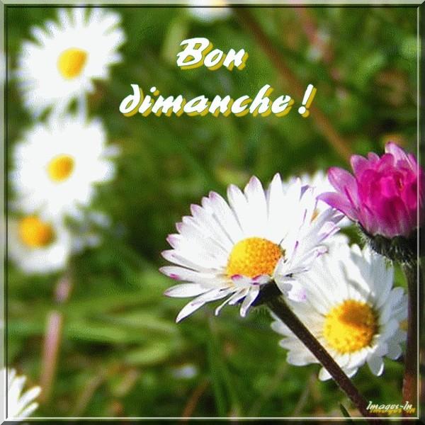Bon dimanche fleuri !