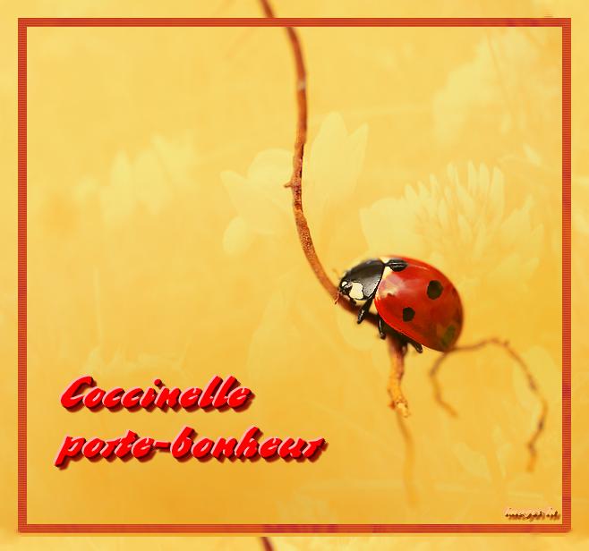 Coccinelle porte bonheur - Poeme coccinelle porte bonheur ...