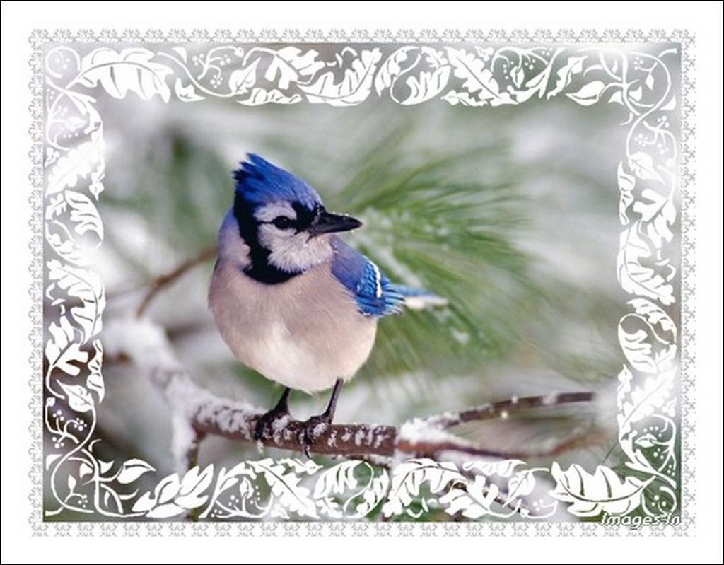 Fond d 39 cran nature en hiver for Fond ecran hiver animaux